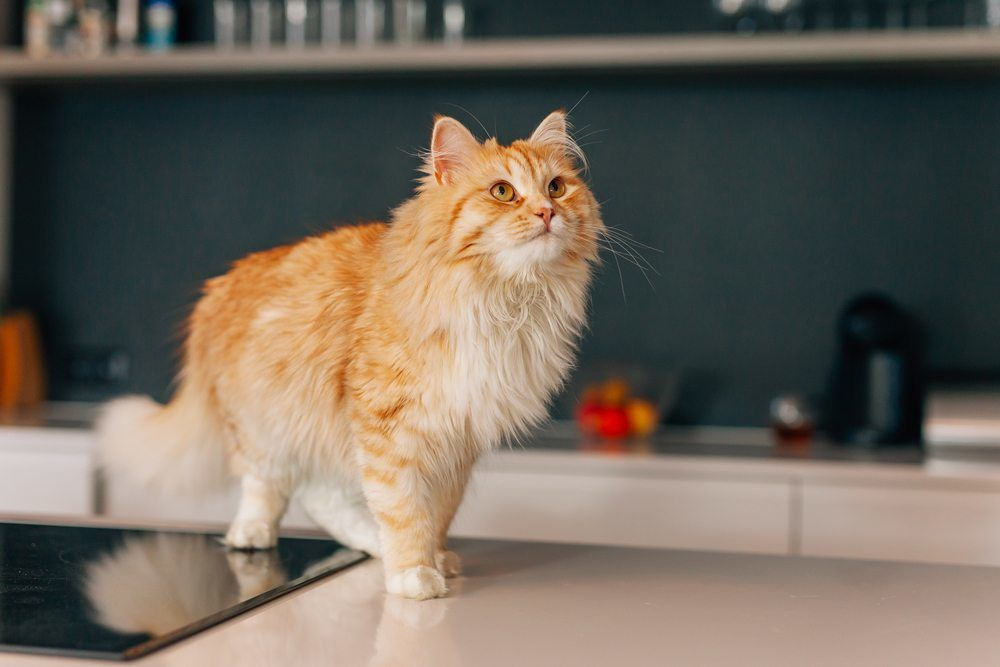 Make Your Kitchen Pet Friendly With A Few Simple